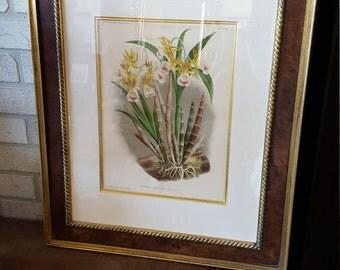 Pair: Botanical Prints