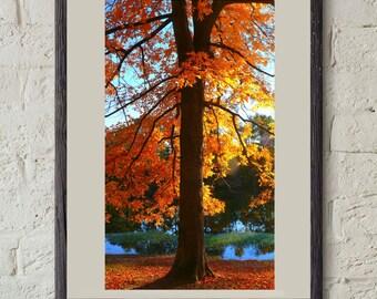 Nature Photography - Fall Tree Photography Print - 5x7 - 8x10 - 11x14