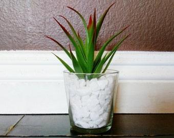 Modern Fake Succulent