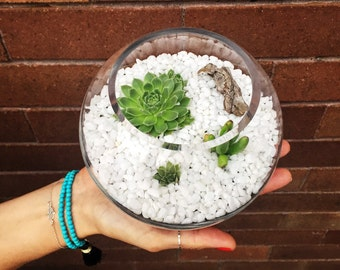 Small fish bowl glass terrarium  / indoor garden / miniature landscape with succulents