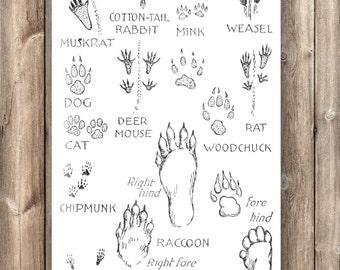 Familiar Mammal Tracks - ON SALE!