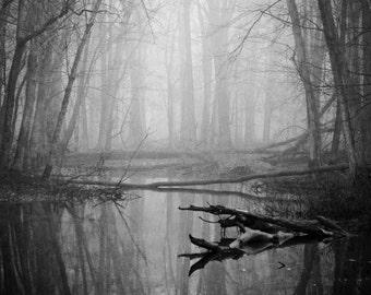 Foggy Morning Creek