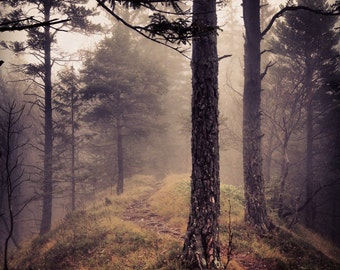 Forest Photo - Forest Path Photo - Forest Digital Photo - Path Photo - Woodland - Square - Digital Photo - Digital Download - Home Decor