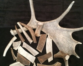 2lbs of moose antler dog chews