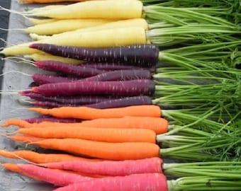 Carrot Rainbow Blend 10 Varieties 800+ SEEDS