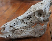 Wild boar skull, engraved with vegetal pattern, for cabinet of curiosities, oddity, carved bone, gothic, white