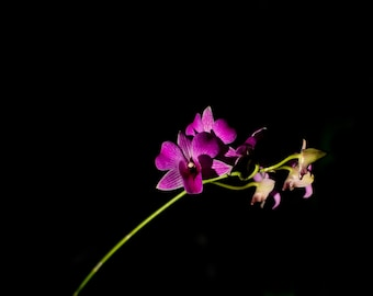 Single Orchid (Digital File)
