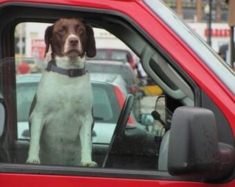 Dog in Pickup - Detroit USA