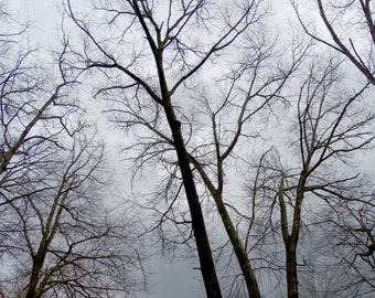 Original PHOTOGRAPHY *Looking up in the trees* 5x7 photograph