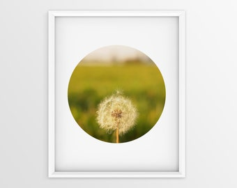 Printable wall art, dandelion photography, dandelion print, dandelion photo, macro photography, nursery decor, wall decor, flower print