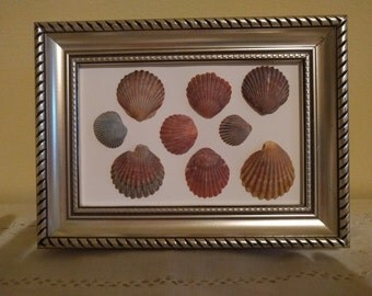 Seashells Collage in Recycled Open Frame