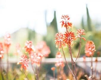 Vibrant Desert Flowers blooming, Sonoran Desert of Arizona, Desert Southwest Fine Art