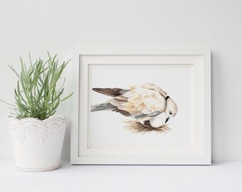Dove print of watercolour painting D097DL, downloadable art. printable art, dove watercolor painting, white and cream nursery art