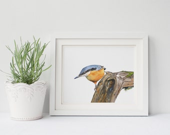 Nuthatch print of watercolour painting N098DL, downloadable print, instant download, nuthatch watercolor painting