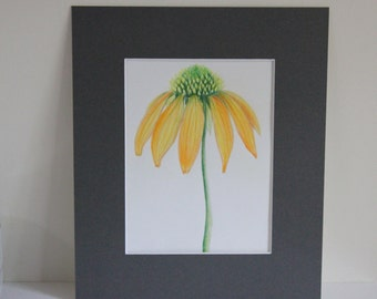 Original Art, Flower Drawing, Coloured Pencil Drawing, Art, Wall Art, Gift Idea