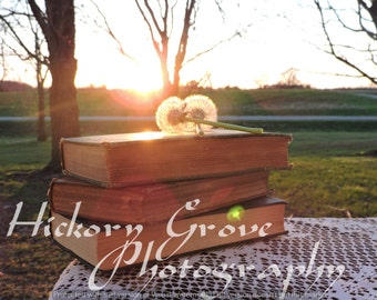 Dandelion  And Antique Books At Sunset