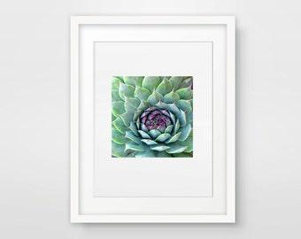 Green Wall Art, Cactus Photography, Photography Print, Succulent Photography, Nature, Green Art, Horticulture Plant Art, Pink & Green Decor