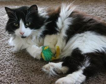 Tuxedo Cat Photography Print