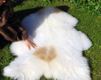 Huge Icelandic sheepskin