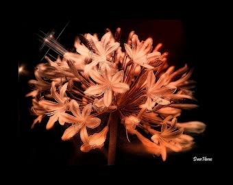 Captivating Bloom