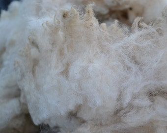Suffolk Sheep Raw Fleece