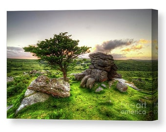 Canvas print of a Hawthorn tree at Holwell Tor on Dartmoor during a cloudy sunset nature tree sunny summer sun natural hot hdr tor devon uk
