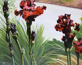 Rusty rose iris - Original painting