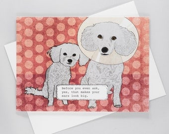 Before you even ask, yes, that makes your ears look big. Funny Dog Greeting Card, Dog Cone, Toy Poodle, Just for Fun, Blank Inside,Hand Made