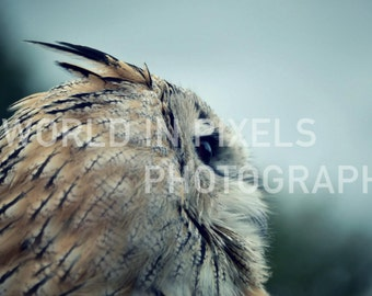 Feathered Friend - Photographic Print 16x20