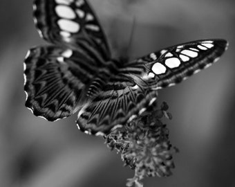 Black and White Monarch Butterfly Series of 3