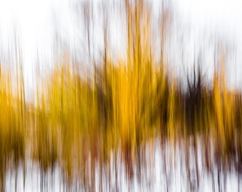 "Modern Art Abstract Photography ""Yellow in Winter"" Photographic Print"