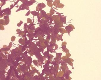 Xray Nature