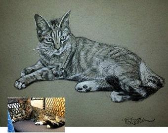 Custom Pet Portrait Cat Drawing