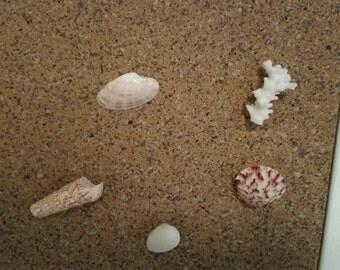 sea shell tacks