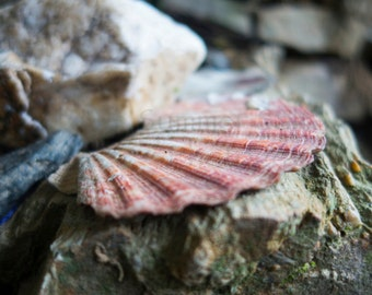 Scallop On The Camino Photograph Art Print