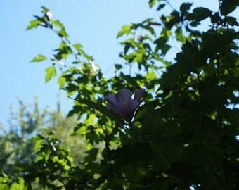 Pink flower in trees