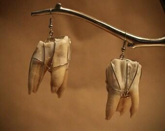 Cow Teeth Earrings (C)