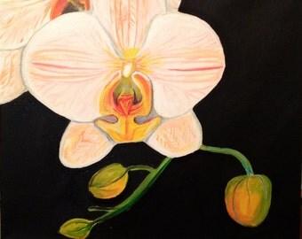 12x12 Peach orchid