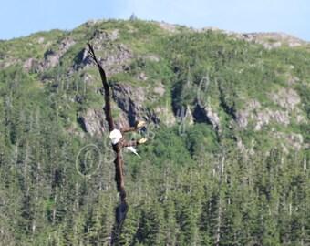 Alaskan WidlLife Independence Day