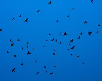 Birds on a Blue Field