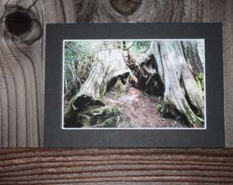 READY TO SHIP: 5x7 Matted Trilliam Lake Print