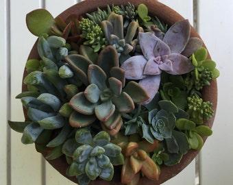 Succulent Arrange in Rustic Clay Pot
