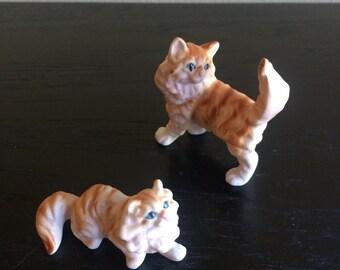 Pretty pair of Apricot Longhair Kitties