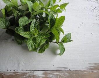 peppermint herb, dried (20 g / 0.7 oz or 50 g / 1.76 oz)