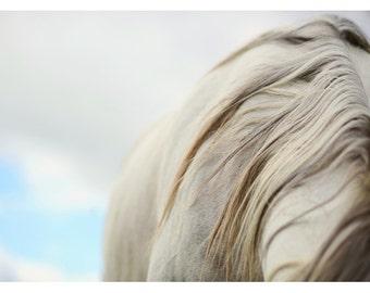 Horse Photograph -Nature Photograph - The White Mare - Horse Art - Equestrian Print - Modern Art - Alicia Bock - Oversize Art - Animal Print