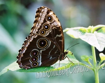 686 2a Butterfly Greeting Card with Matching Envelope Blank All Occasion Note Card-Cards for when you care enough to send handmade!
