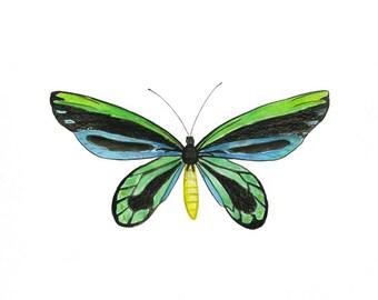 Queen Alexandria's Birdwing Butterfly, Insect Art, Bug Art, Blue, Green, Entomology, Watercolor Print, Butterfly Painting, Insect Painting