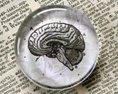Brain Magnet - Jumbo Glass Magnet - Zombie - Anatomical Brain Magnet - Zombie Lovers - Neurologists - Kitchen Magnet
