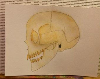 Human Skull Watercolor Painting