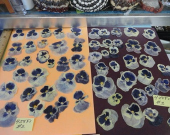 Choose your Pansies Grown in Alaska over 25 Real Pressed Flowers Preserved and Dried 428 FL